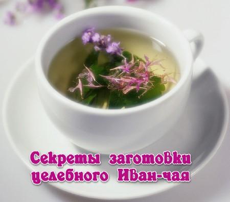 Иван чай заготовка для чая